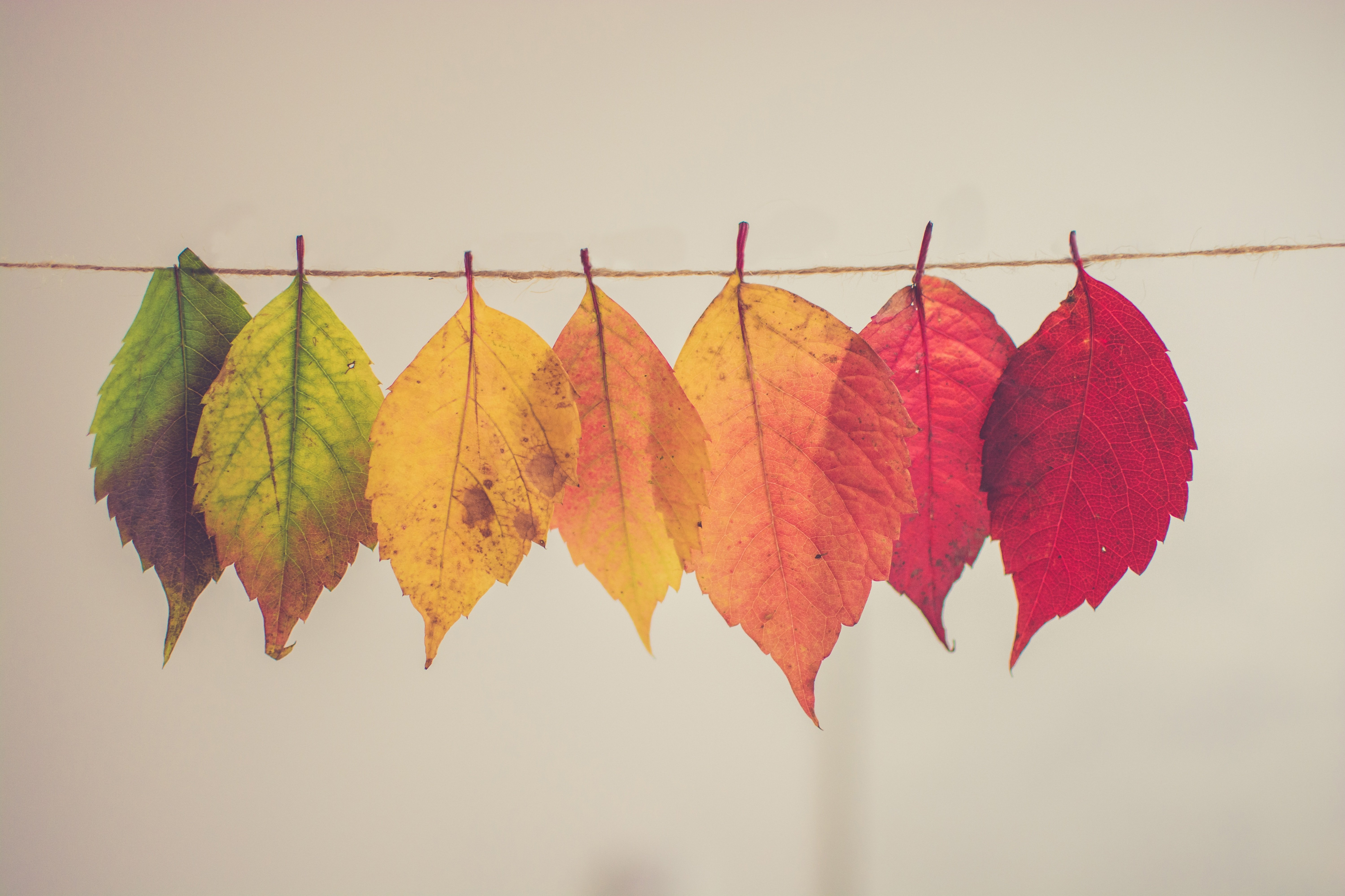 The Top Ten List of Pieces to Learn if Autumn Is Your Favorite Season
